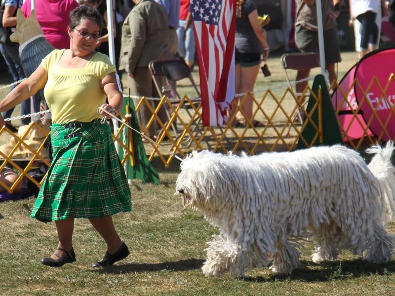 Dog Show In Bridgewater Nj