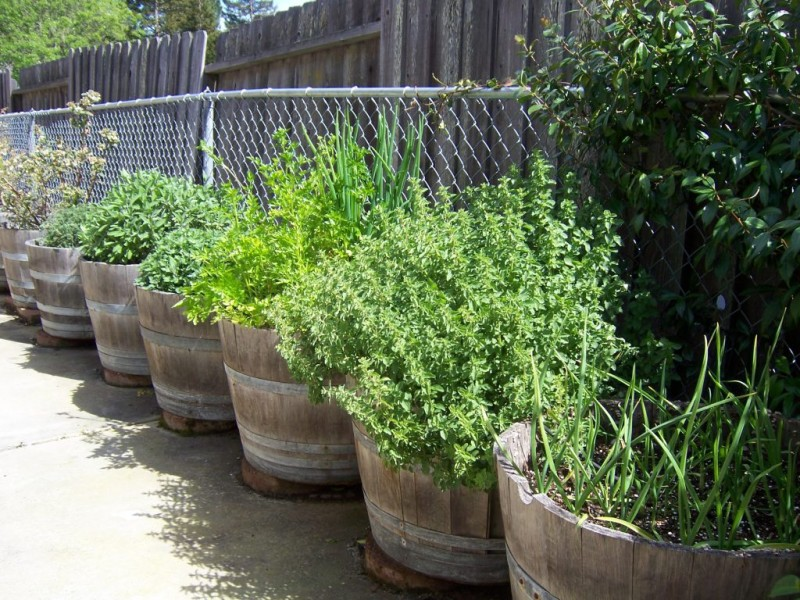Delicieux Growing Herbs In Wine Barrels | Benicia, CA Patch