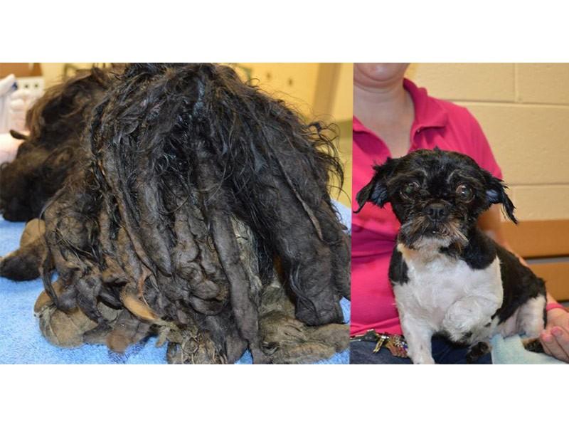 Dog Grooming Burke Va