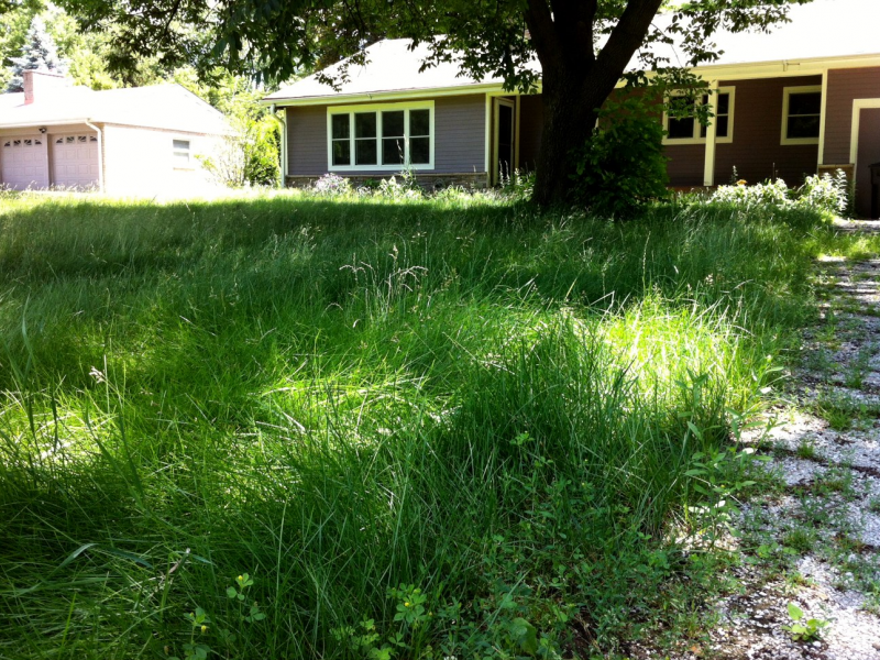 ... Not Cutting Your Grass Could Cost $3,000-0 ...
