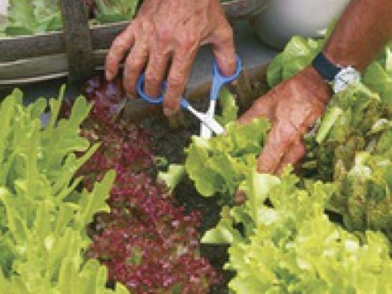 consider these heat drought tolerant vegetables for your garden 0 - Vegetable Garden Ideas Minnesota