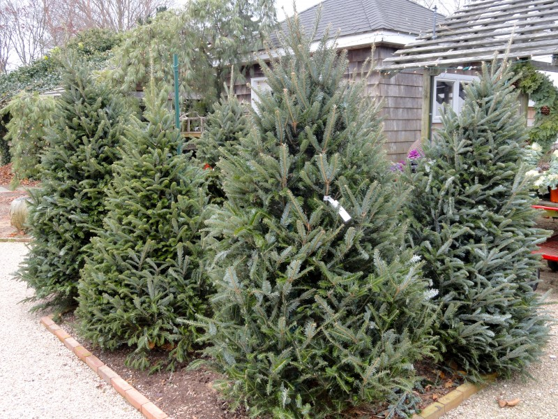 15 places to buy a christmas tree - Buy Christmas Tree