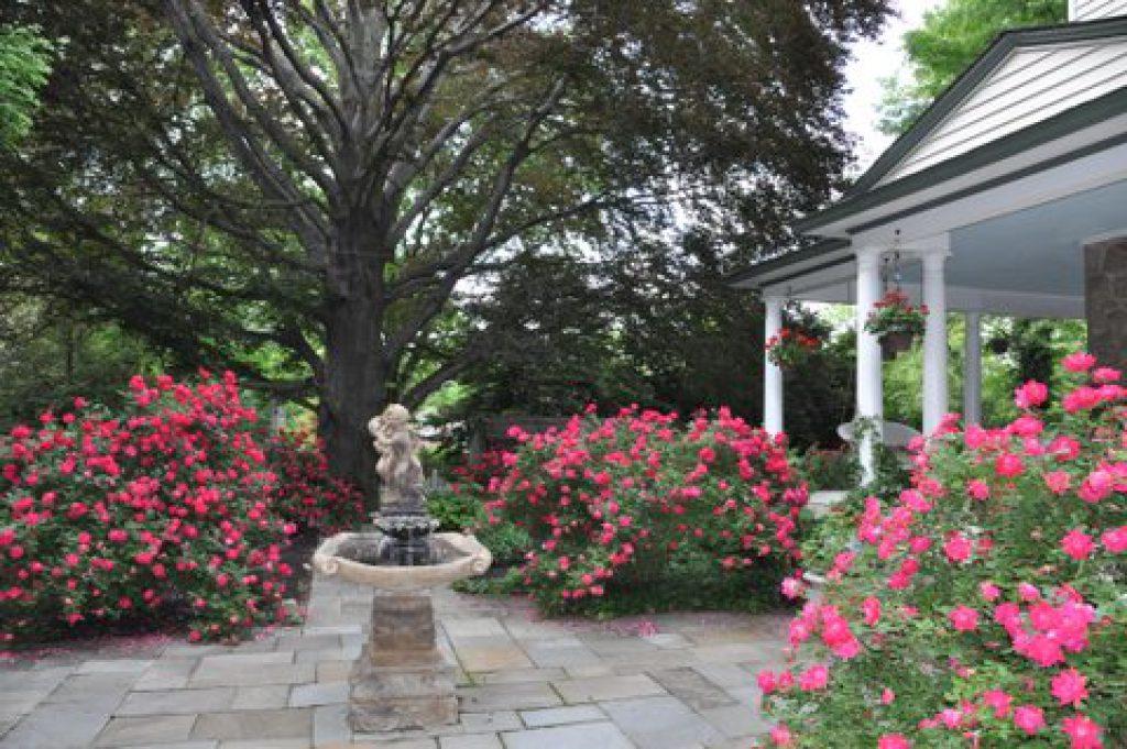 Roses In Garden: Knockout Roses- Keep 'em Flowering All Summer Long
