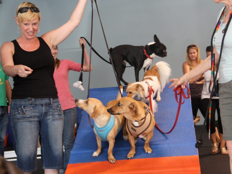 Dogs Disco At Zoom Room Yappy Hour West Hollywood Ca Patch