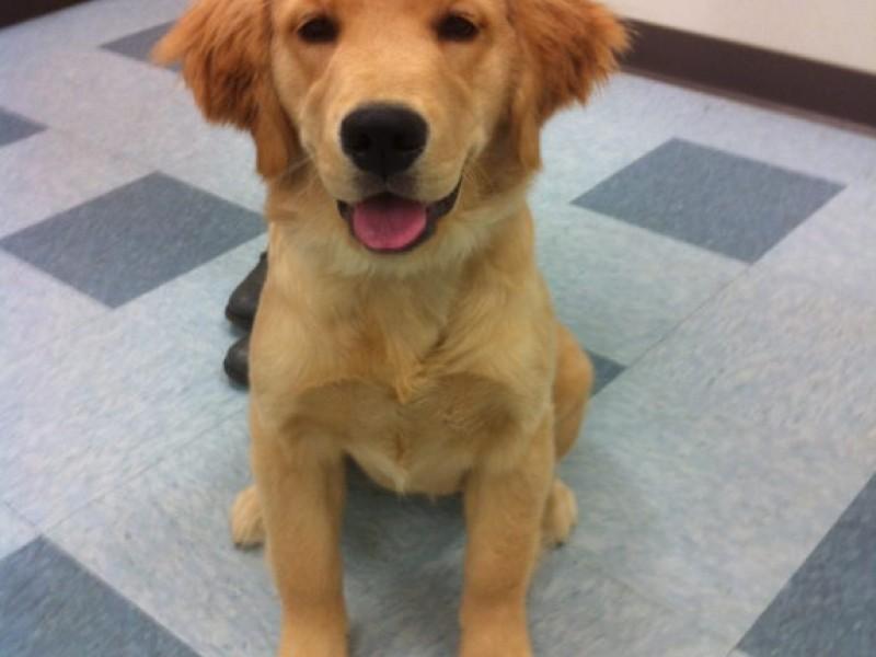 Dog Training In Monroe Ct