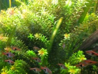 ... Aquascape Chicago Provides Maintenance And Cleaning To Large  Aquariums 7 ...