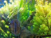 Aquascape Chicago Provides Maintenance And Cleaning To Large Aquariums 2 ...