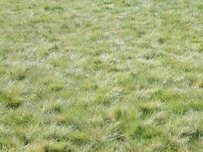 wild grass texture. Go Native | Benicia, CA Patch Wild Grass Texture