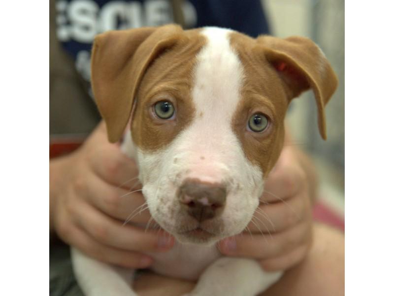 Humane Society Dog Adoption Mn