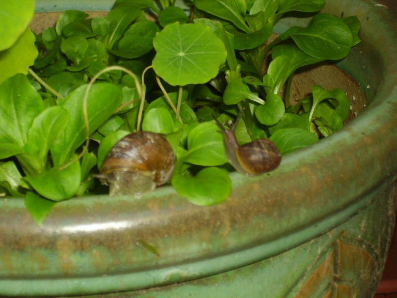 Getting Rid of Slugs and Snails the Natural Way | Gilroy ...