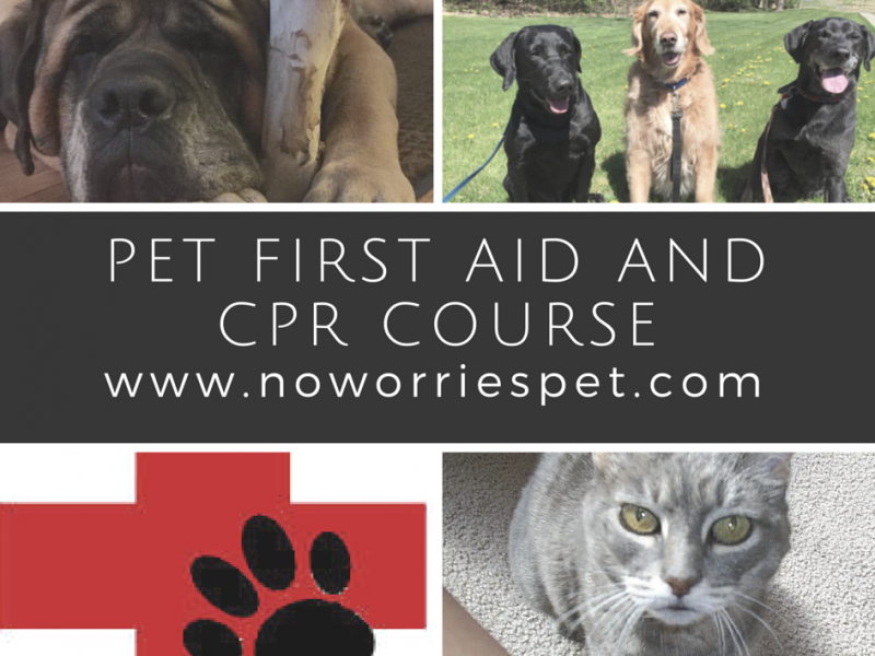pet cpr and first aid class | emmaus, pa patch