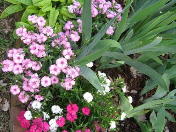 My Top 10 Perennials for the Shade Garden Town And Country MO