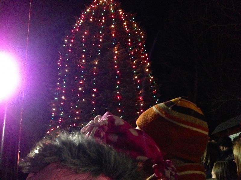 Christmas Tree Danbury Connecticut