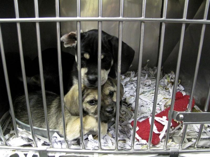 Euthanasia horror stories underline importance of animal rescue euthanasia horror stories underline importance of animal rescue solutioingenieria Choice Image