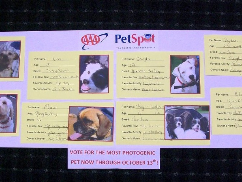AAA PetSpot Launch Photos | West Hartford, CT Patch