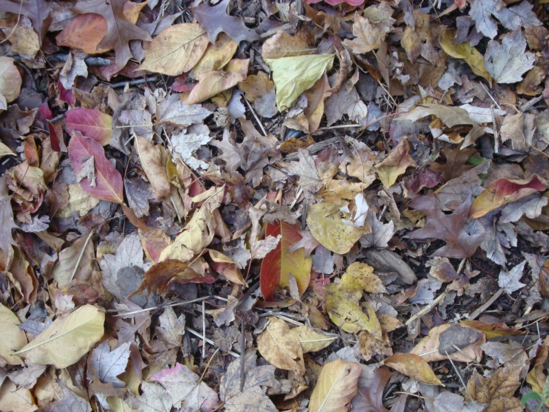 Curbside Yard Waste And Leaf Collection Wakefield Ma Patch