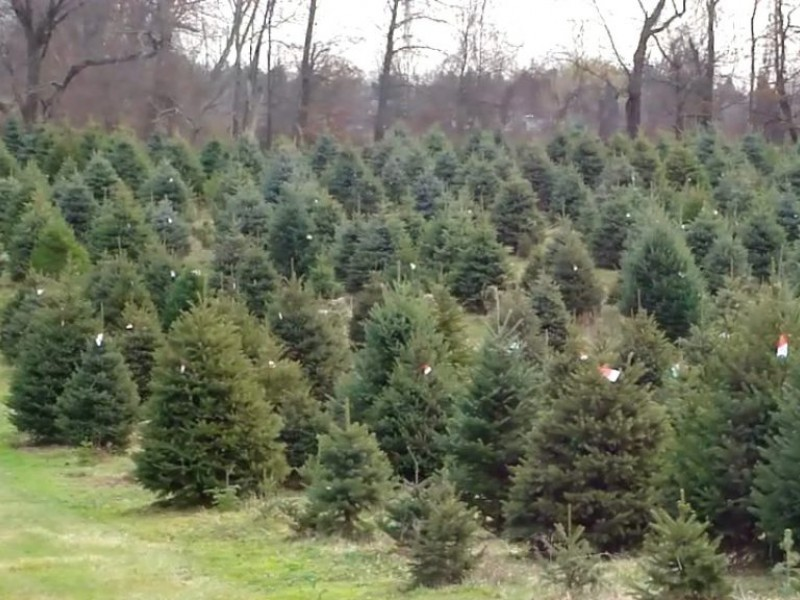 Christmas Tree Farm Business Offers Big Benefit to Owners | Oakland Township, MI Patch