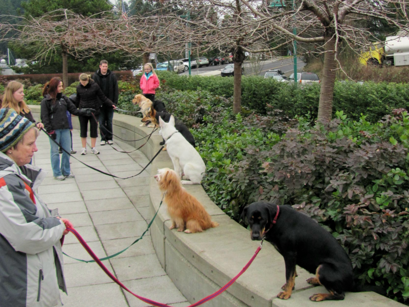 Dog Training Kirkland Washington