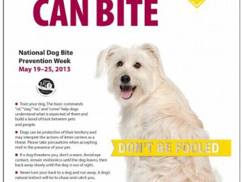 National Dog Bite Prevention Week of May 19-25 | Dedham ...