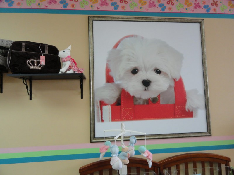 Video Broadway Puppies Opens Fair Lawn Nj Patch