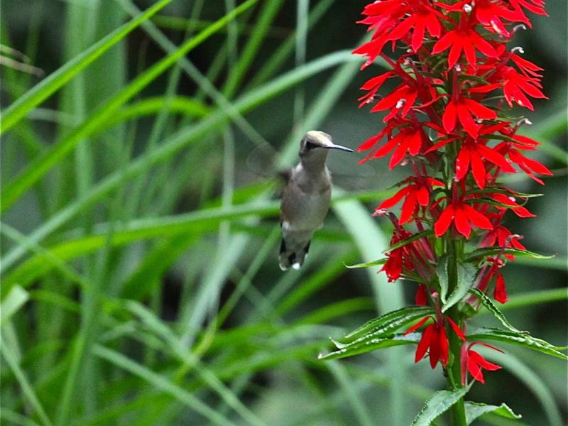 Hummingbird Don T Fly Away