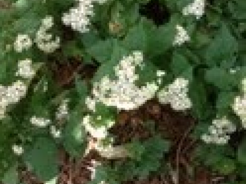 AWOL In The Native Garden? | Three Village, NY Patch