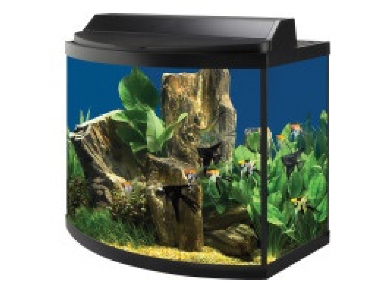 10 gallon bowed fish tank 5 gallon hexagon tank orland for Best fish for 5 gallon tank