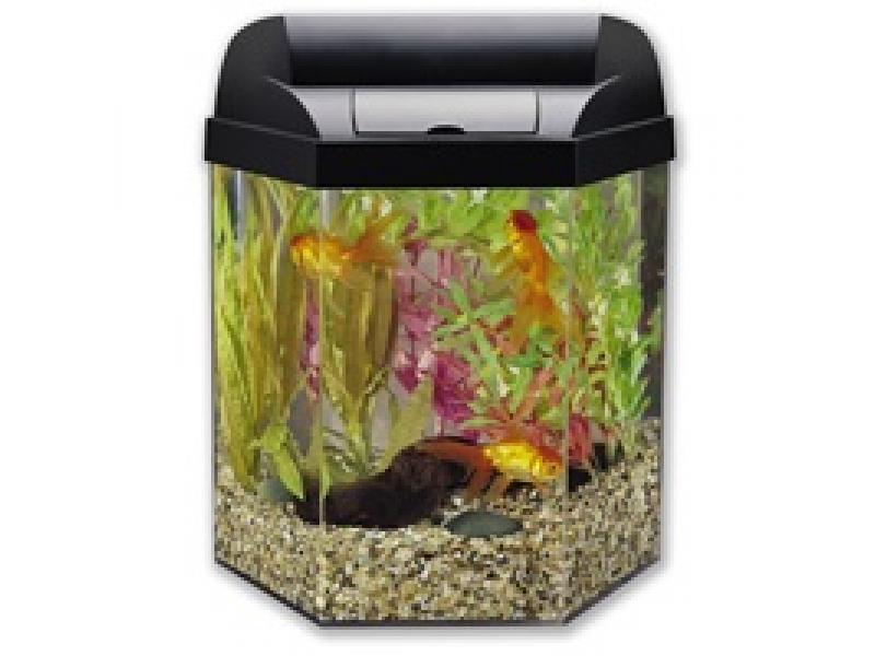 10 gallon bowed fish tank 5 gallon hexagon tank orland for 10 gallon fish tanks