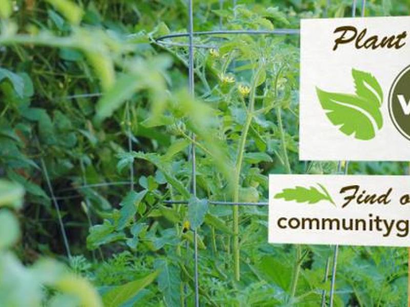 VEAP Community Gardens   Richfield, MN Patch
