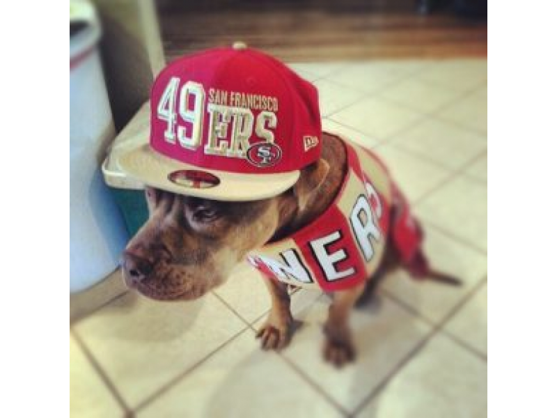 Aww! Cutest 49ers Fans Show Team Spirit  c97c67c22