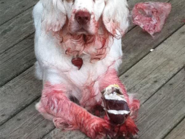 Best Zombie Or Rabid Dog Costume Dunedin Fl Patch
