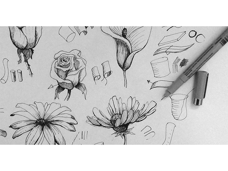 Line Drawing Of Rose Plant : Drawing workshop journal your garden through art leaves