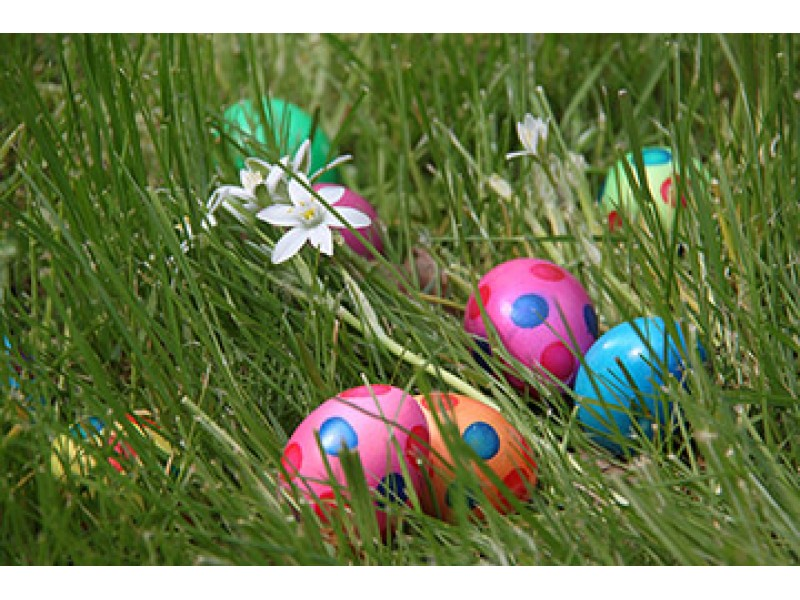 Free Easter Egg Hunt at McCue Garden Center | Woburn, MA Patch