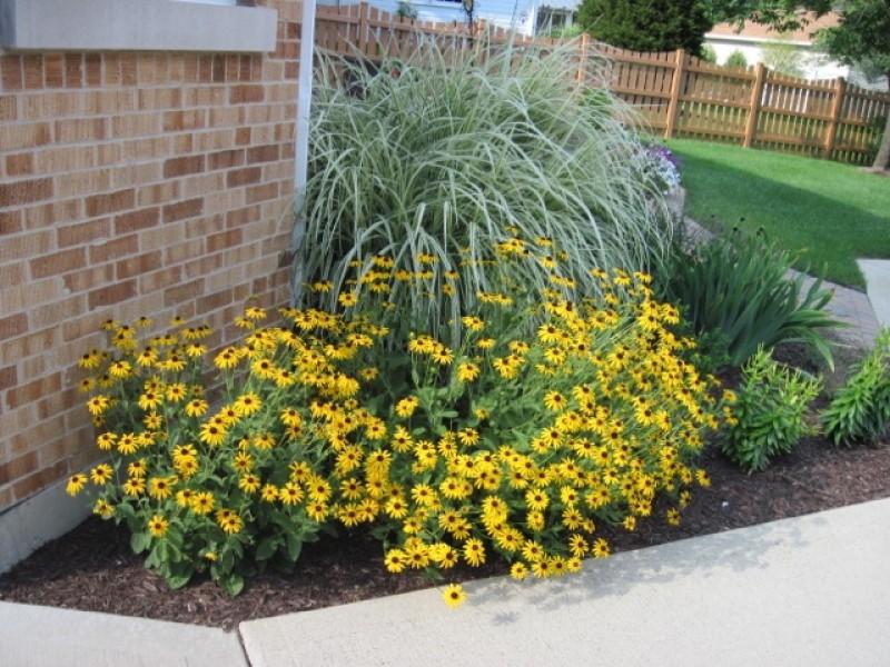 Free program on home landscape design western springs for Home garden design course