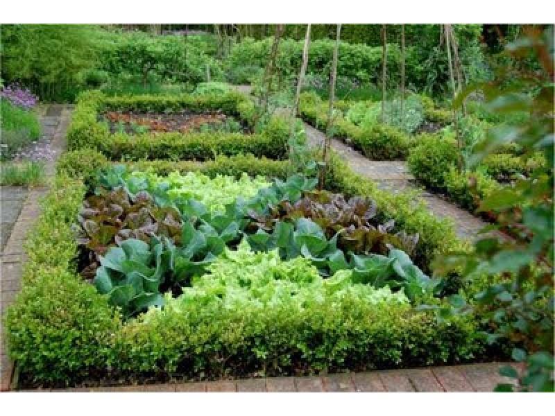 Potager Gardens | Bernardsville, NJ Patch