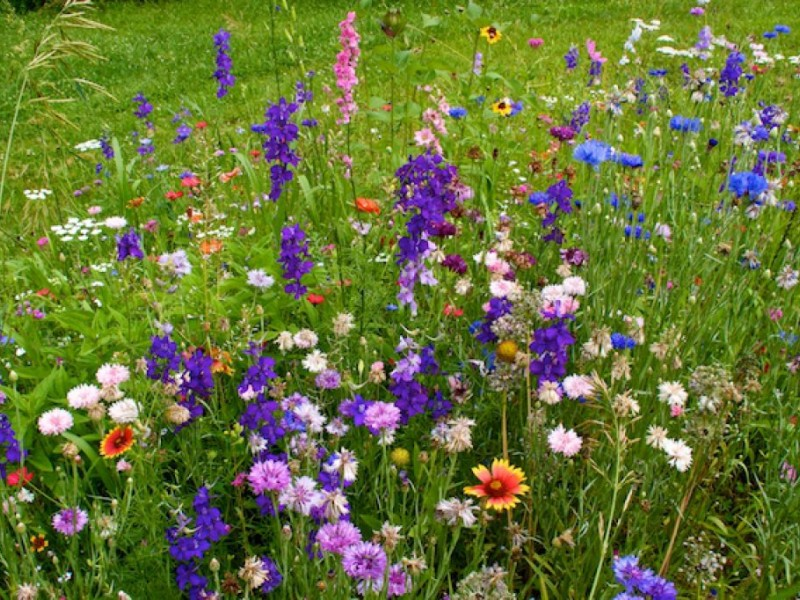 Charter club home wildflowers pictures.