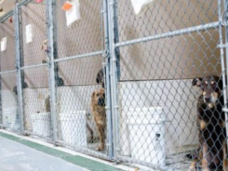 Pending Legislation Would Ban Gas Chambers at Michigan Animal Shelters