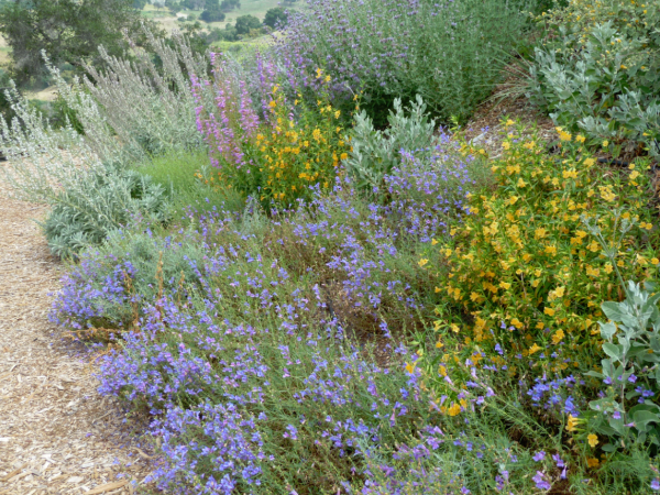 Designing Your Garden With California Native Plants