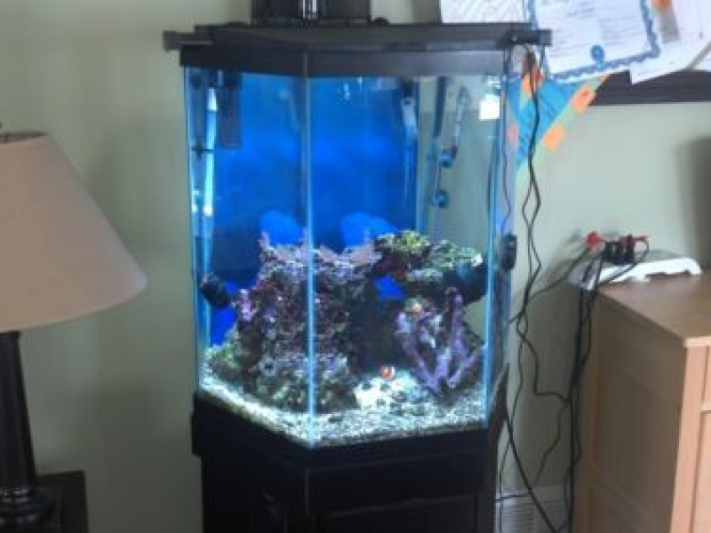 35 gallon fish tank combo mint condition east windsor for Hexagon fish tank
