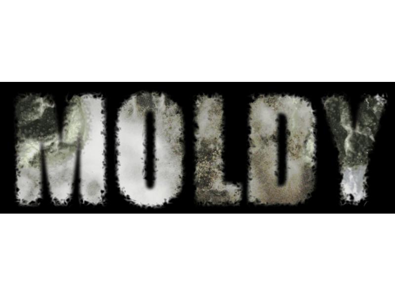 The Health Hazards Of Toxic Mold