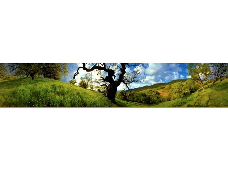 Save Mount Diablo to Host Hikes Saturday