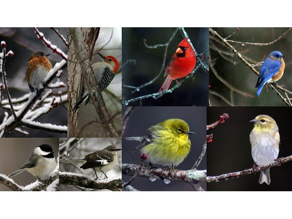 nature center to hold great backyard bird count dunwoody ga patch