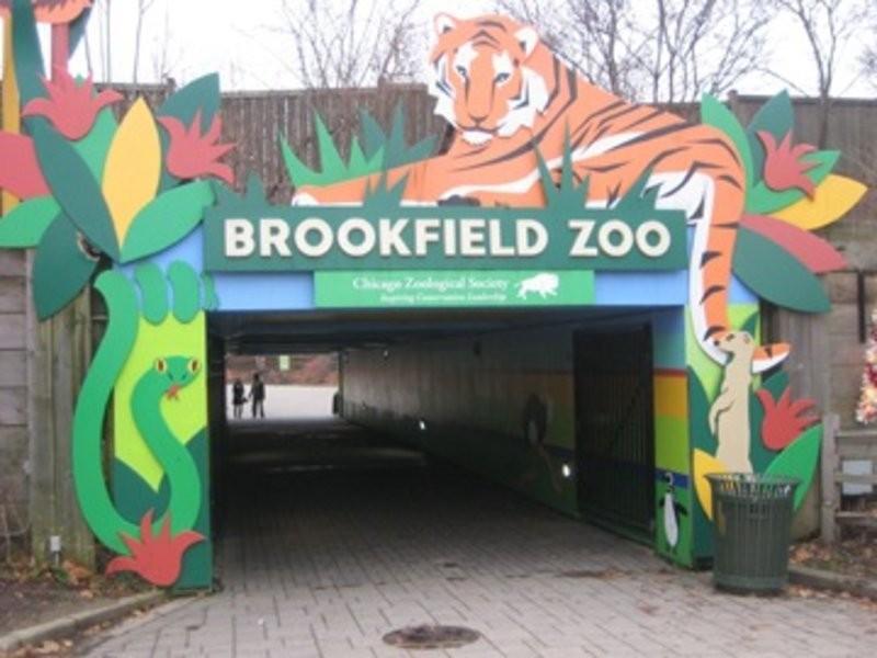 Brookfield Zoou0027s Schedules August December Events