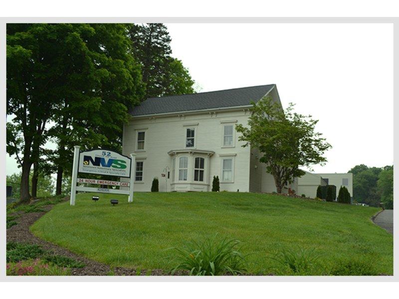 Newtown Business Spotlight: Newtown Veterinary Specialists | Newtown ...