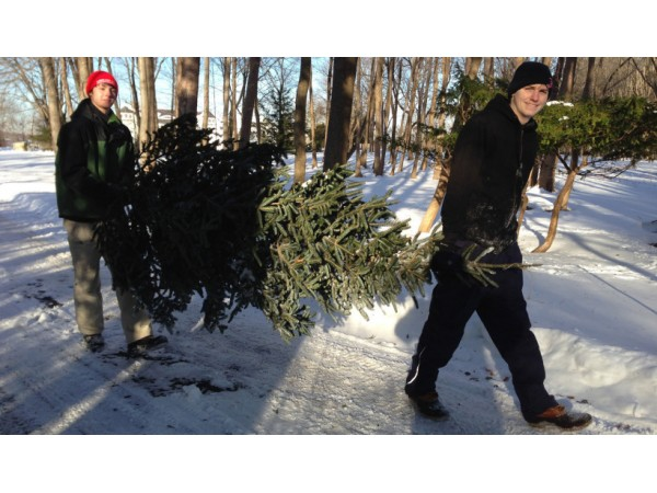 Hingham Boy Scouts to Hold Christmas Tree Pick Up - Hingham, MA Patch