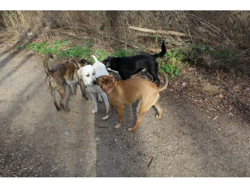 Rockville Dog Park