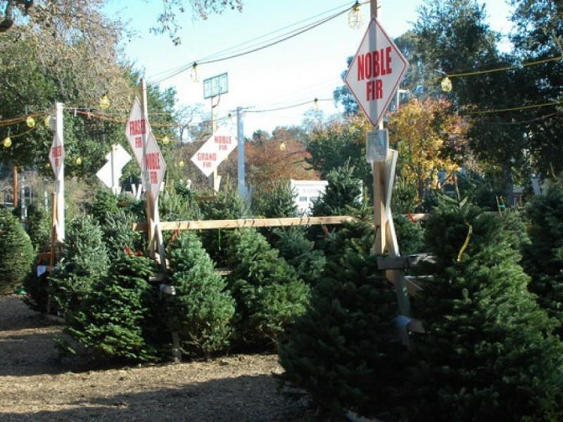 Wrentham Christmas Trees