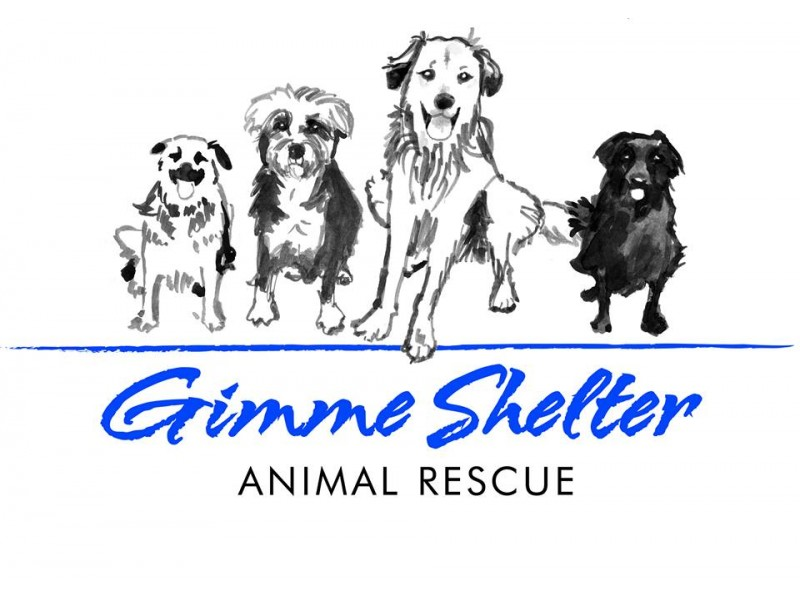 a new animal shelter to benefit the communtiy essay An animal shelter animal shelters: another chance at life or they will do all in their power to find a great new home for animals that may have been.