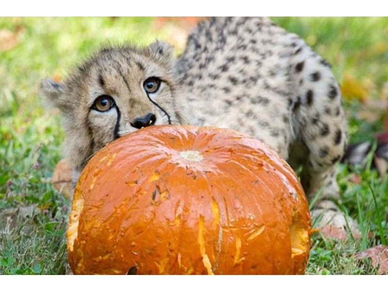 celebrate halloween at the national zoo this weekend