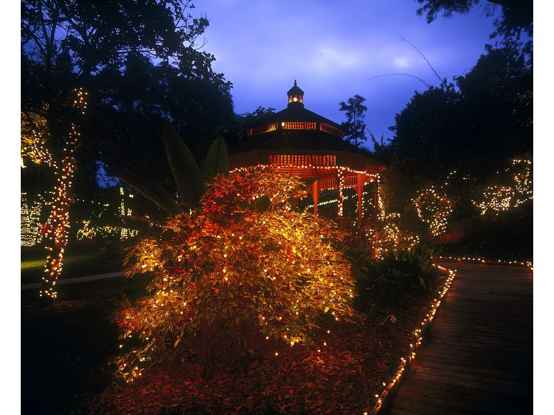 Holiday Garden Of Lights At San Diego Botanic Garden In Encinitas